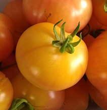 Vegetable Seeds : Vine Tomato Seed, Large